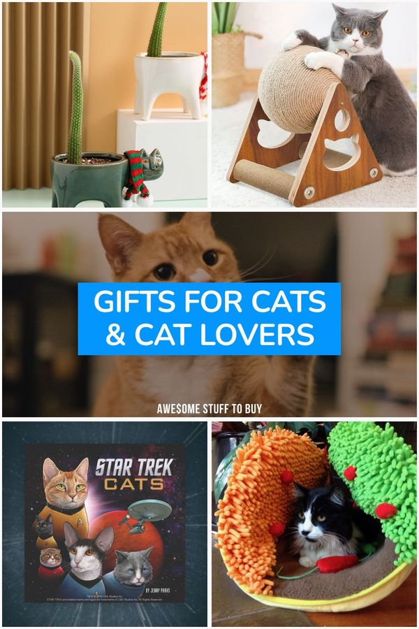 Gifts for Cats // Awesome Stuff to Buy